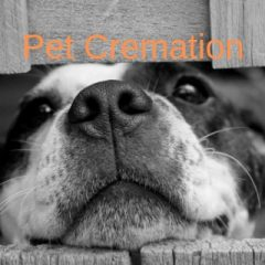 pet cremation services, pet cremation